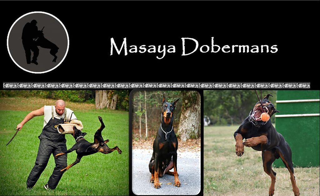 Masaya Dobermans