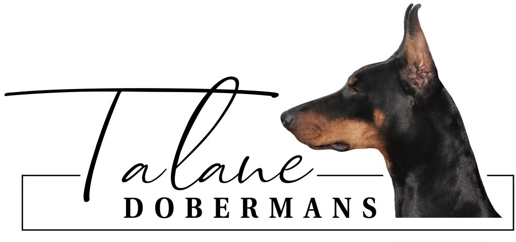 Talane Dobermans